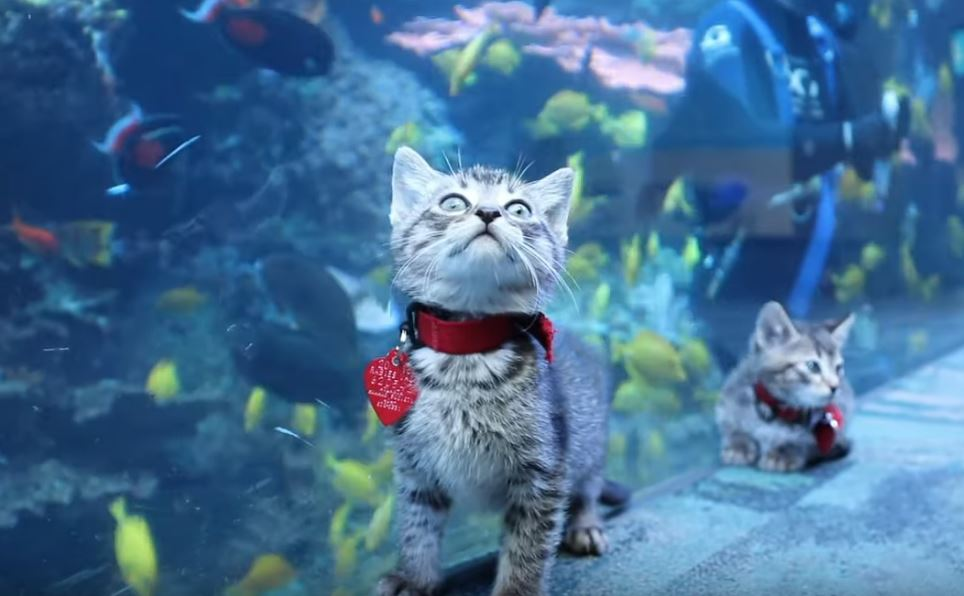 kitten field trip to aquarium 4