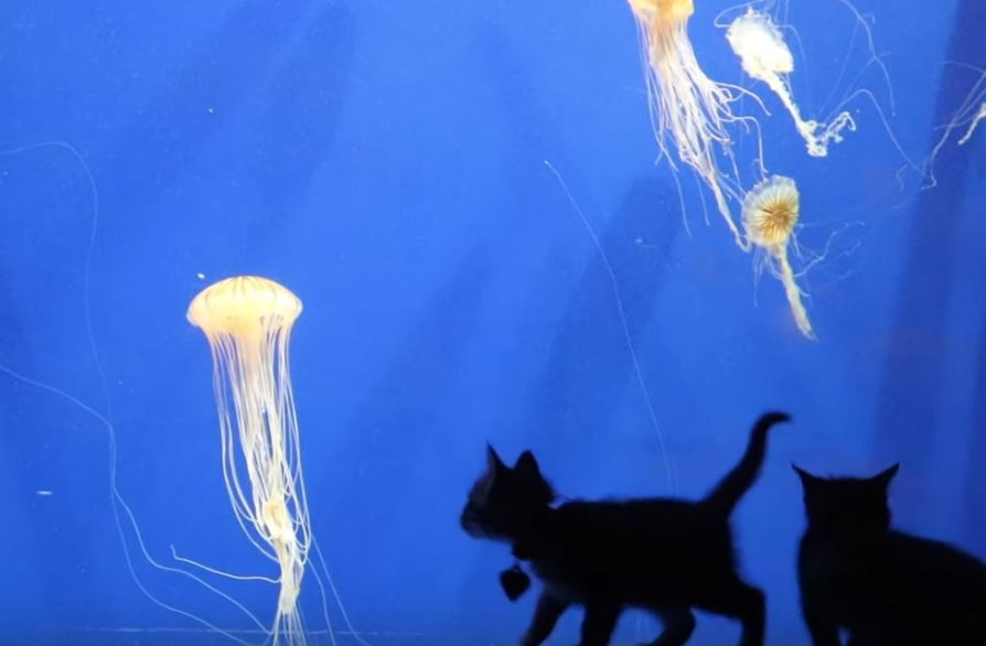 kitten field trip to aquarium 6