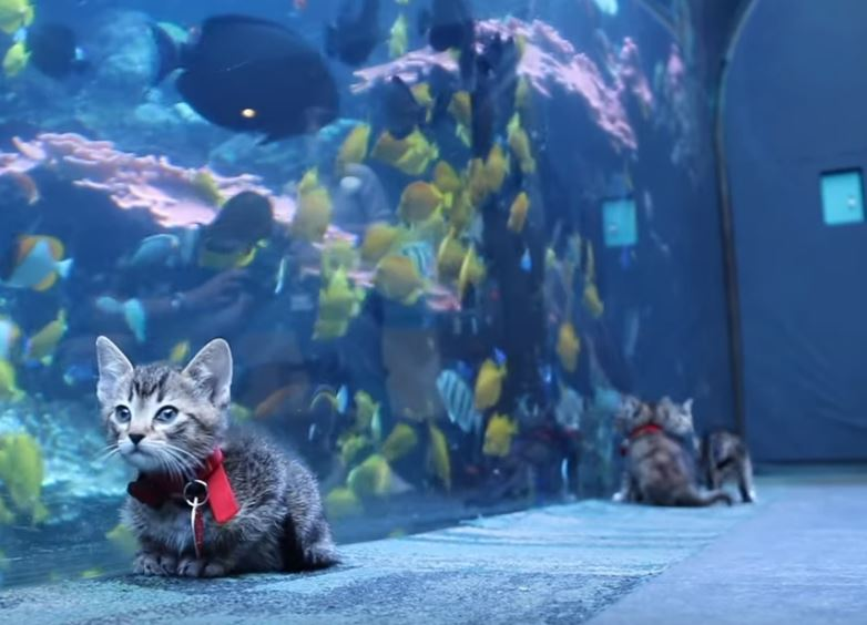 kitten field trip to aquarium 5
