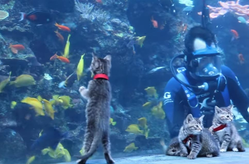 kitten field trip to aquarium 7