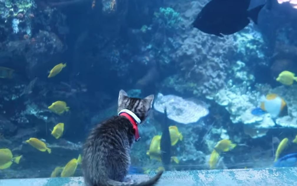 kitten field trip to aquarium 3