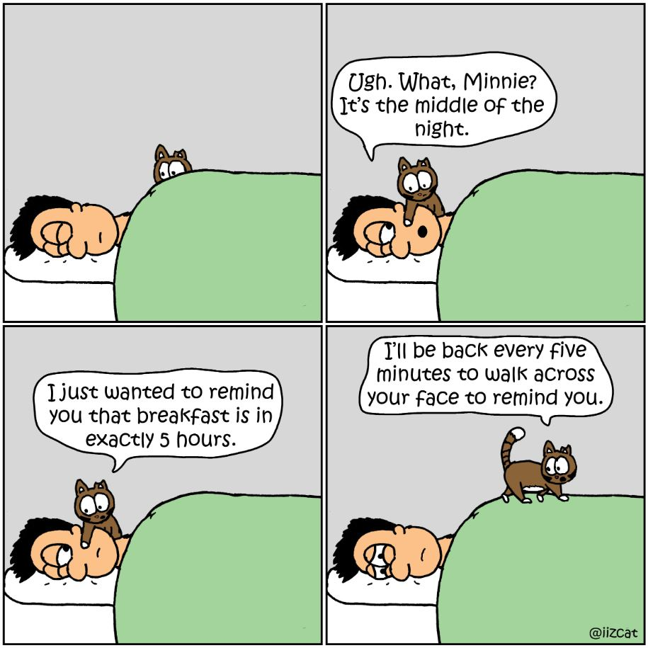 feed the cat comic